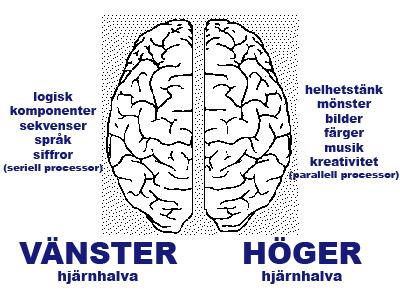 hur fungerar hjärnan